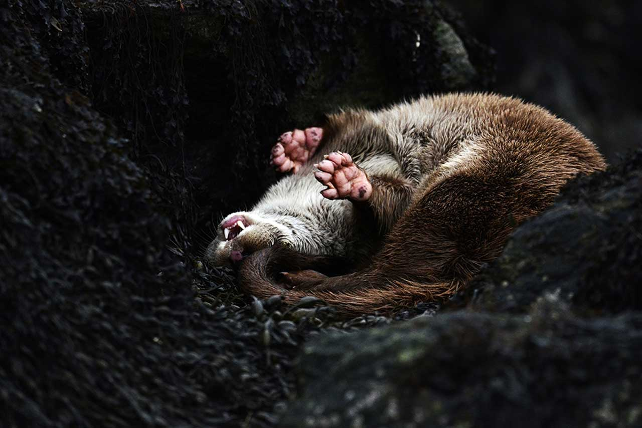 Photo: Previous Winner - Otter
