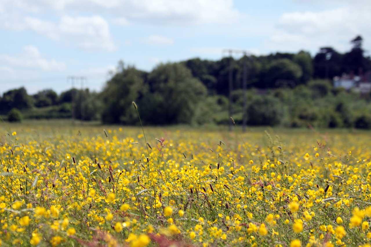 Photo: Lugg Meadow