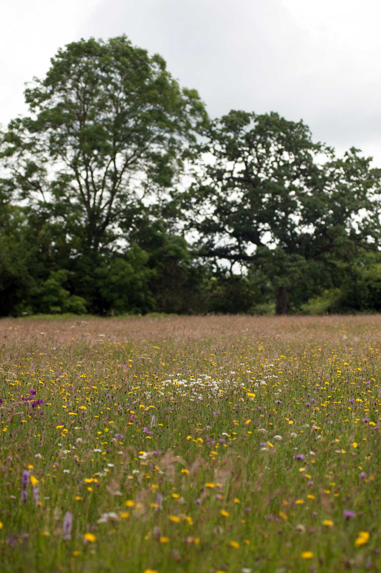 Photo: Ryewater Farm, Dorset