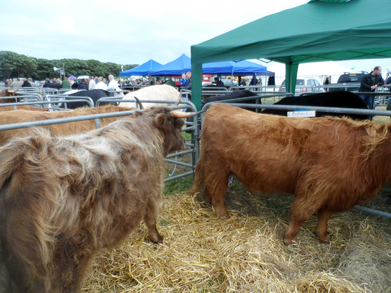 Photo: Caithness County Show 2014 - Saturday