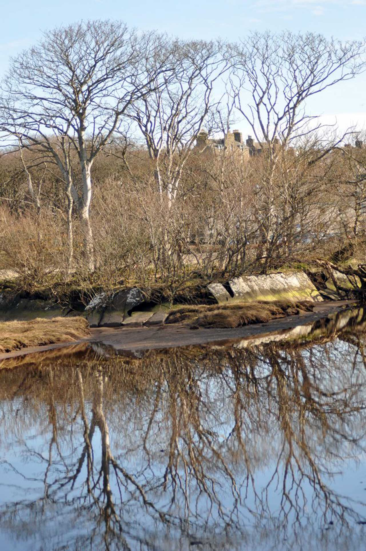Photo: Springtime Is Finally Breaking Out In Caithness