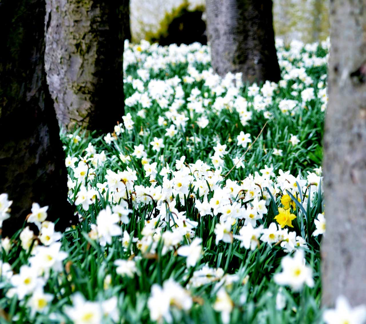 Photo: Action And Colour For Springtime In Caithness