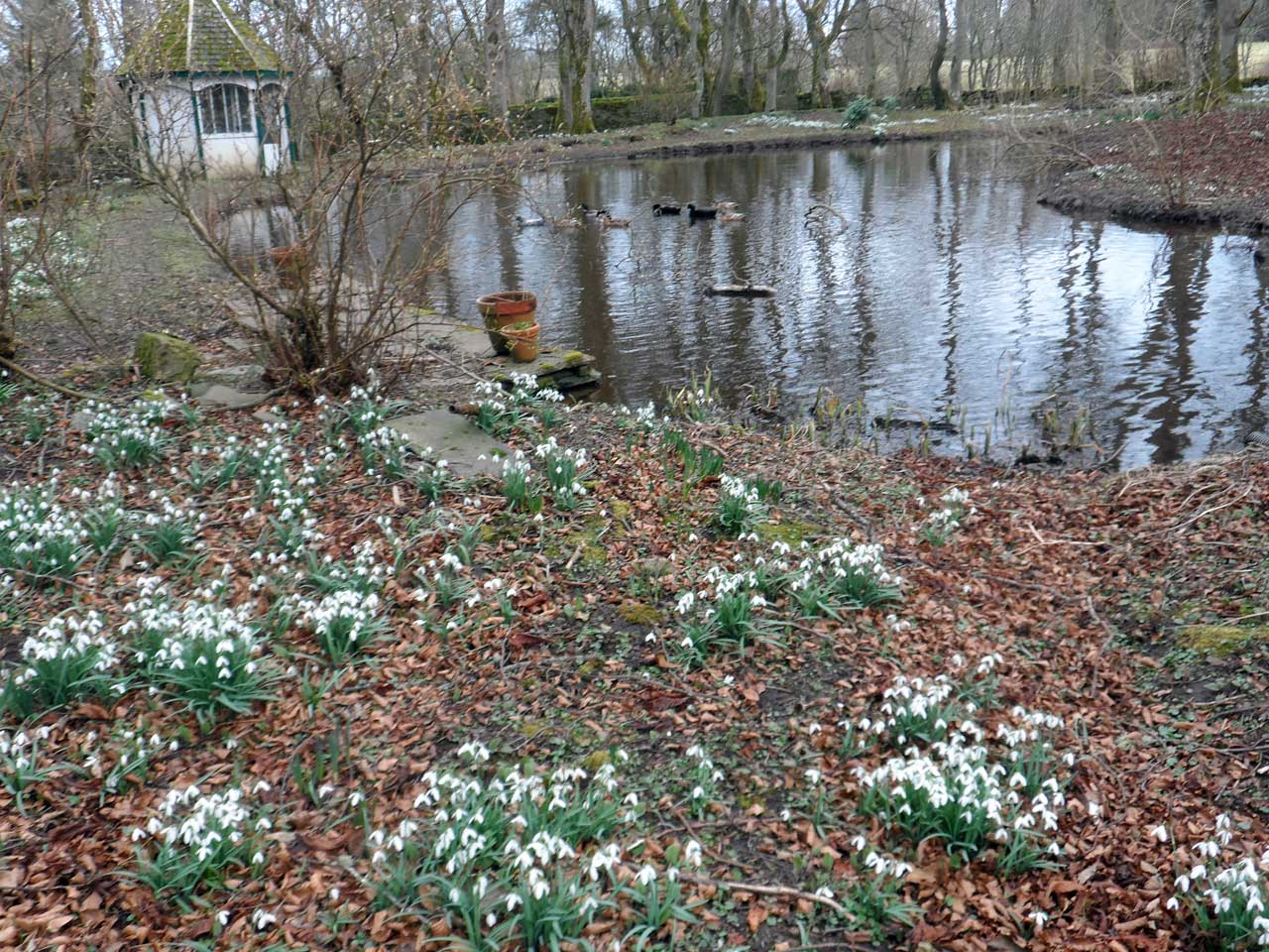 Photo: Snowdrop Day At Thrumster House
