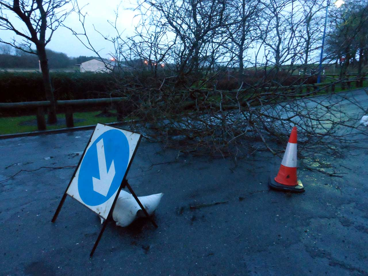 Photo: Tree Down At Rose Garden, Wick