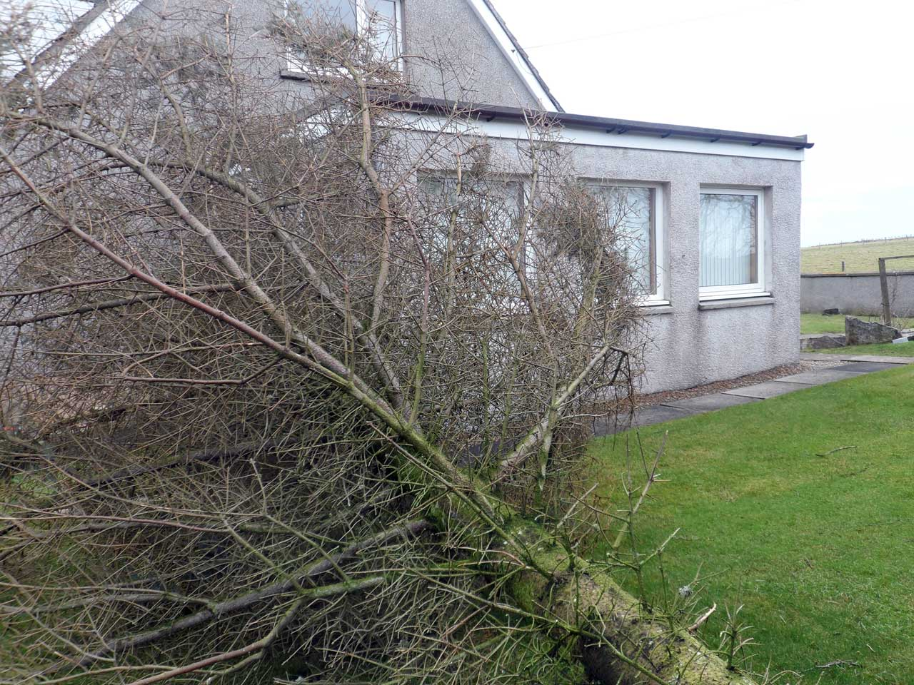 Photo: Tree blown down at March Road, Wick