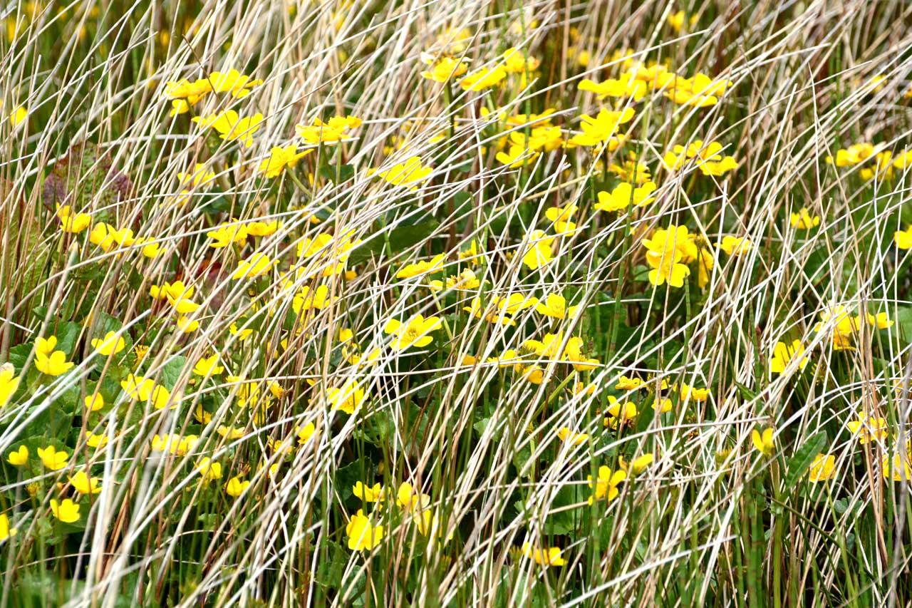 Photo: Auckengill Nature Trip
