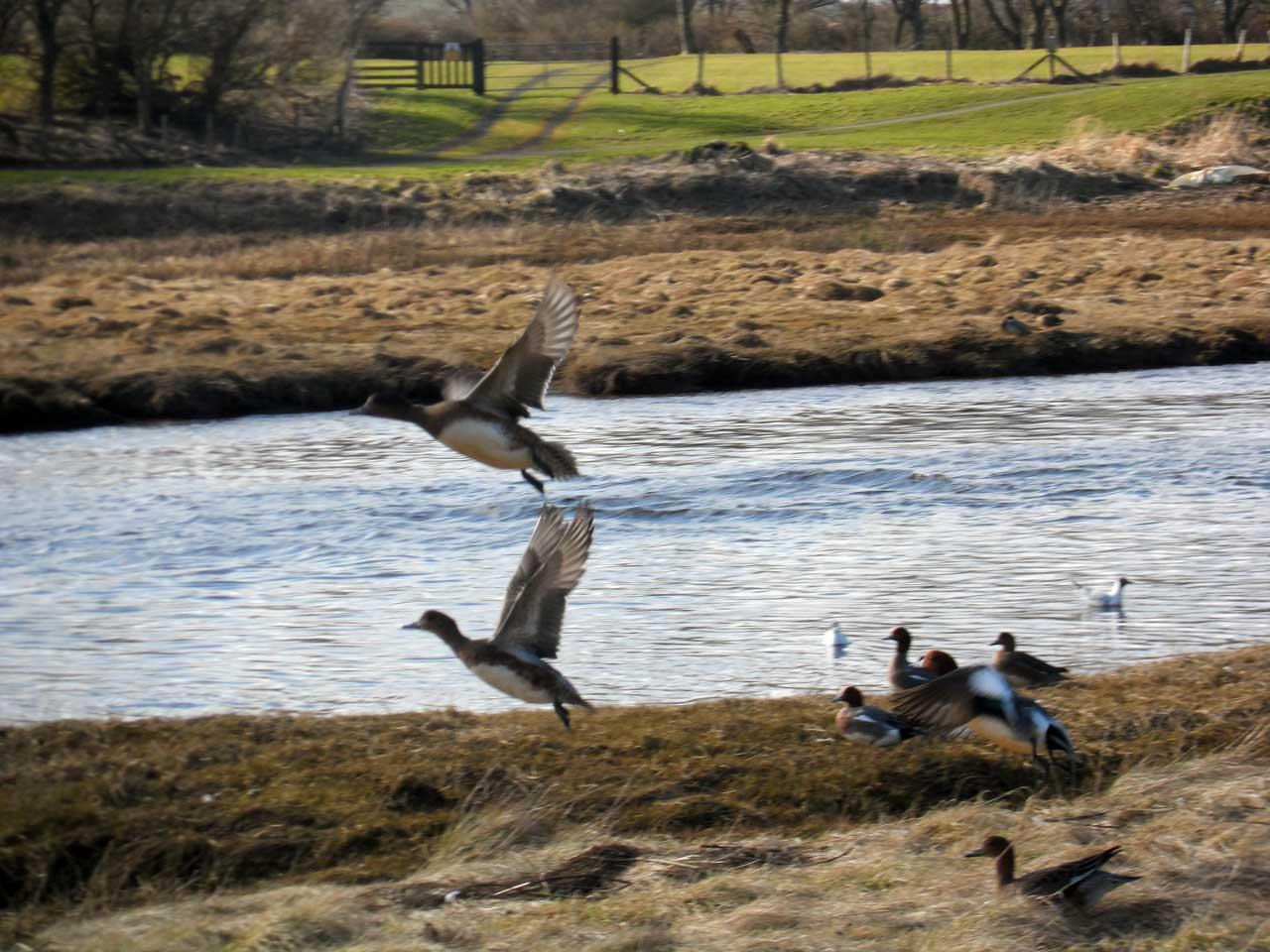 Photo: Ducks Love The Wick River