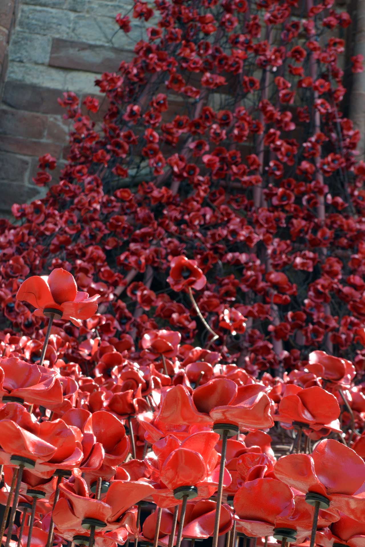 Photo: Poppies - Weeping Window in Orkney