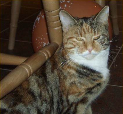 Photo: Izzy Is missing From Pulteneytown In Wick - Have You Seen Her?
