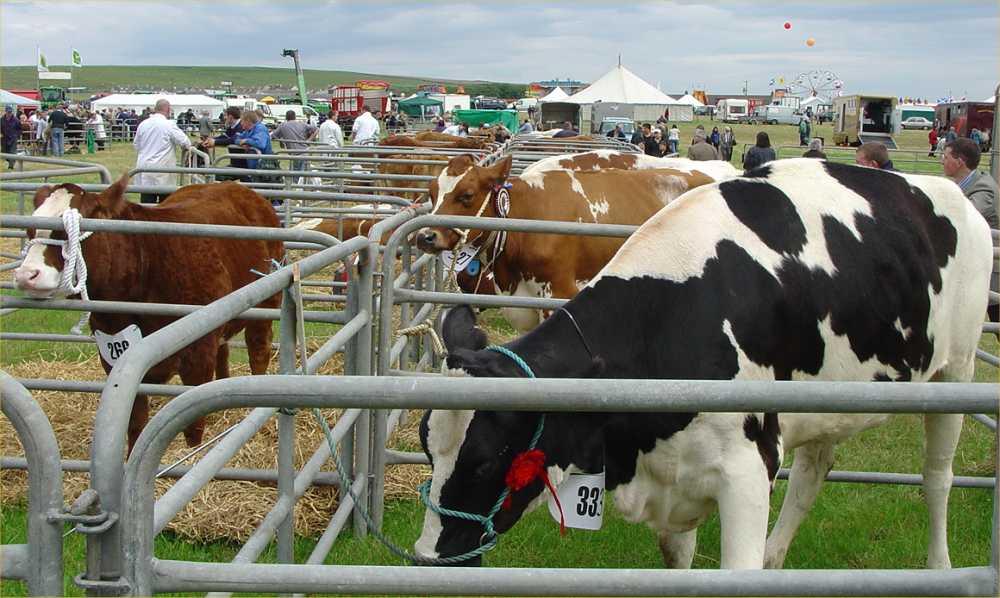 Photo: Caithness County Show 2004