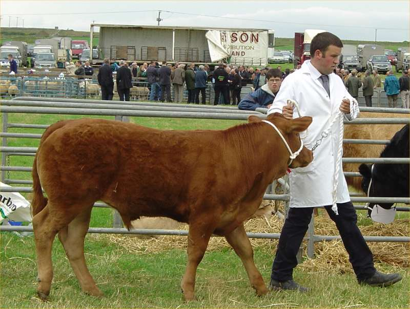 Photo: Caithness County Show 2004