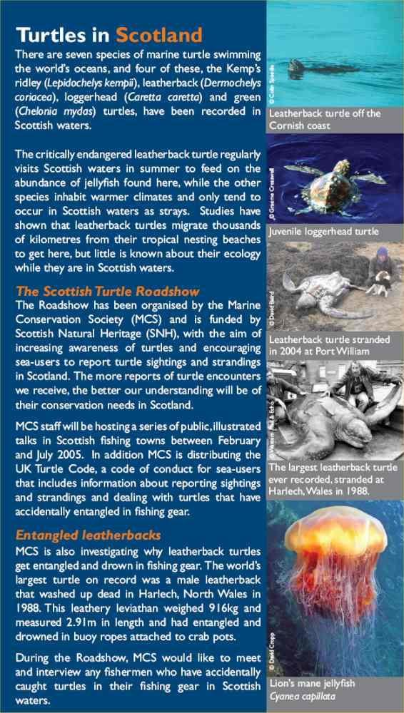 Scottish Turtle Roadshow Comes To Caithness 3 Of 4