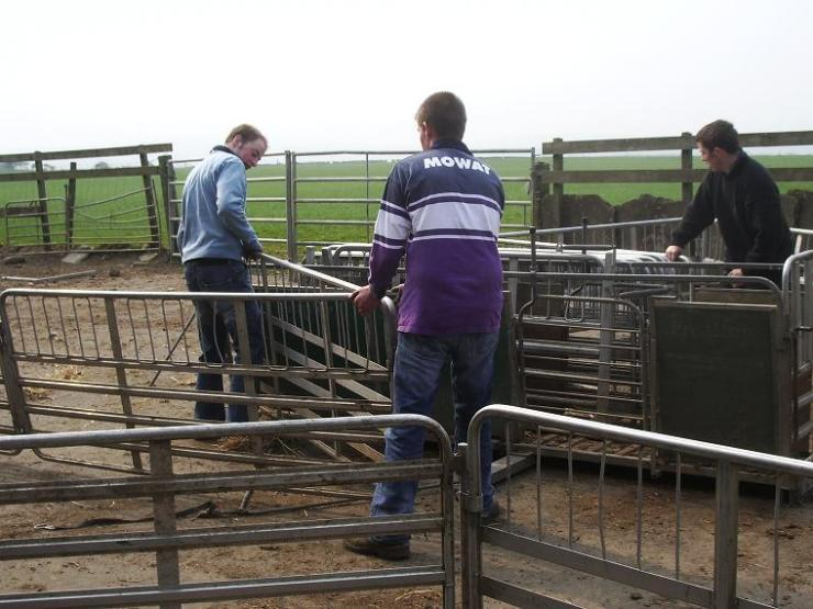 Photo: Sheep Pen Erection and dismantling