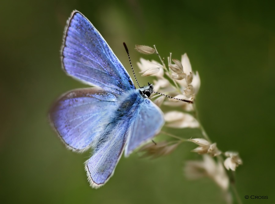 Photo: Found In The Meadow At Dunnet Forest