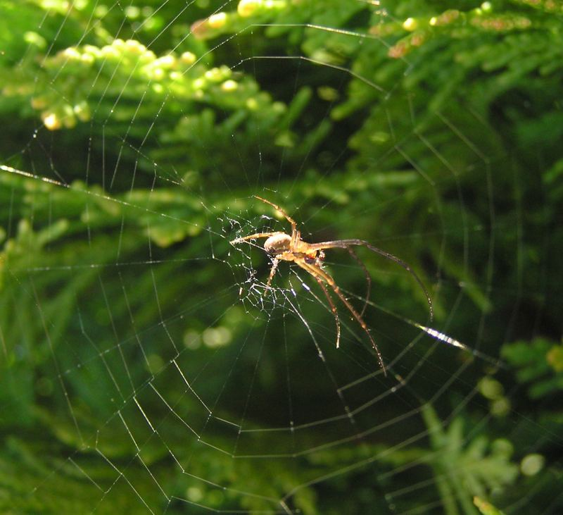 Photo: Spiders Web