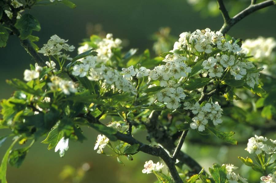 Photo: Blossom