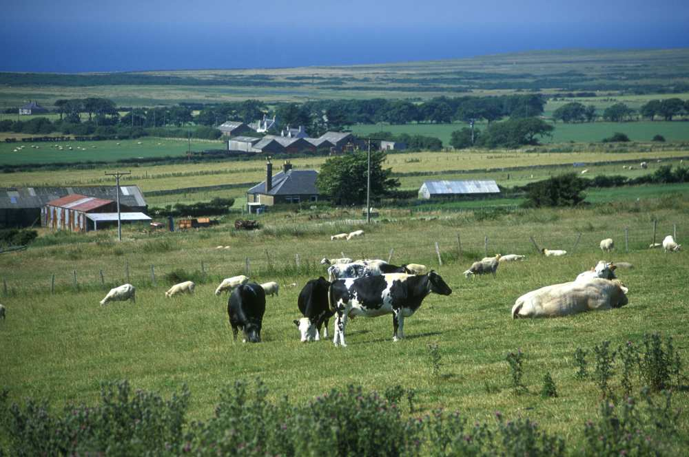 Photo: Farmland Westfield 2