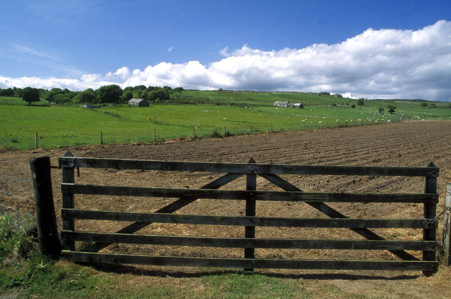 Photo: Gate And Field