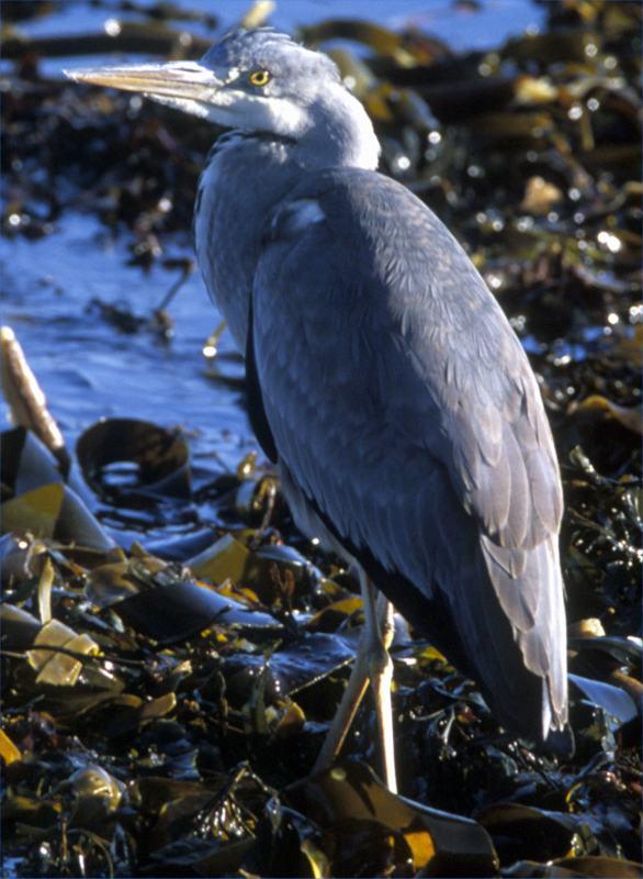 Photo: Heron