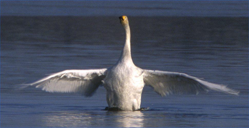 Photo: Hooper Swan