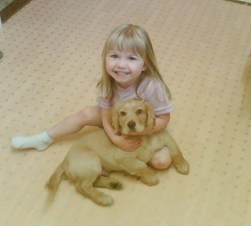 Photo: Golden Cocker Spaniel Alfie Aged 13 Weeks And Owners Daughter