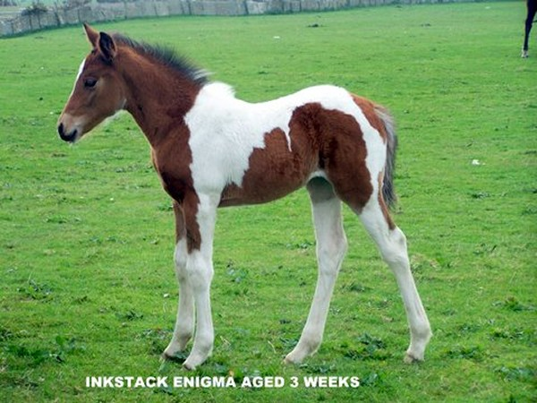 Photo: Inkstack Enigma - 3 Weeks Old