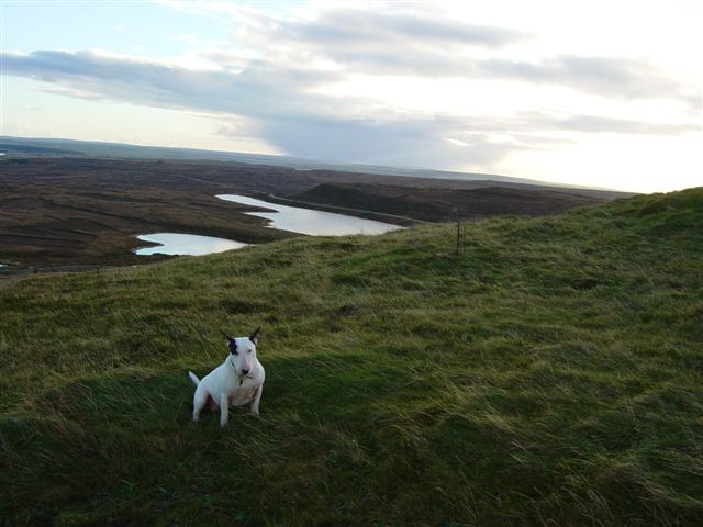 Photo: Beauty - The Most Northern Dog In Scotland
