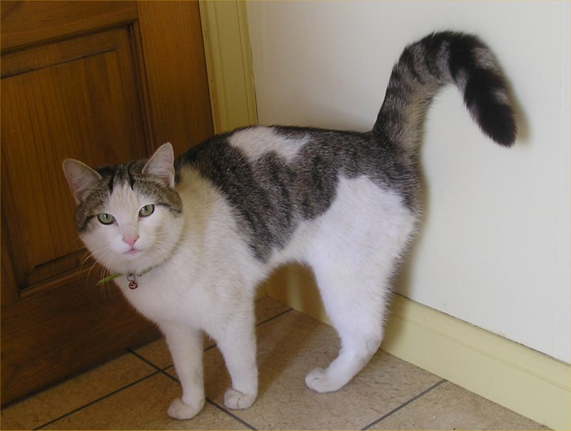 Photo: Stray Cat Found - Owner Identified
