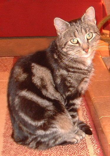 Photo: Topsy Missing From Main Street, Castletown