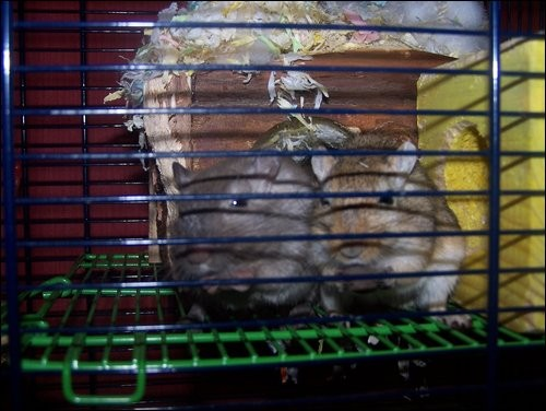 Photo: James and Jerry The Gerbils