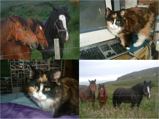 Photo: Cats and Horses