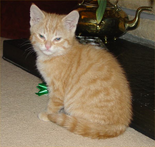 Photo: Rehomed From Balmore Animal Centre - Female Kitten - Sister