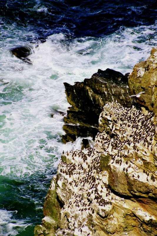 Photo: Troup Head, Banffshire -