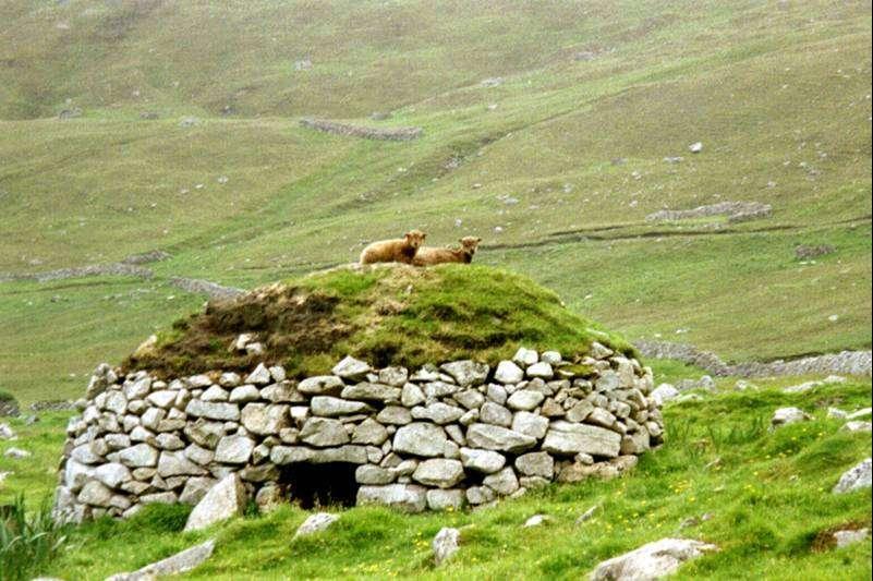 Photo: Soay Sheep On A Cleitan - St Kilda