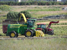 Harvesting Near Wick