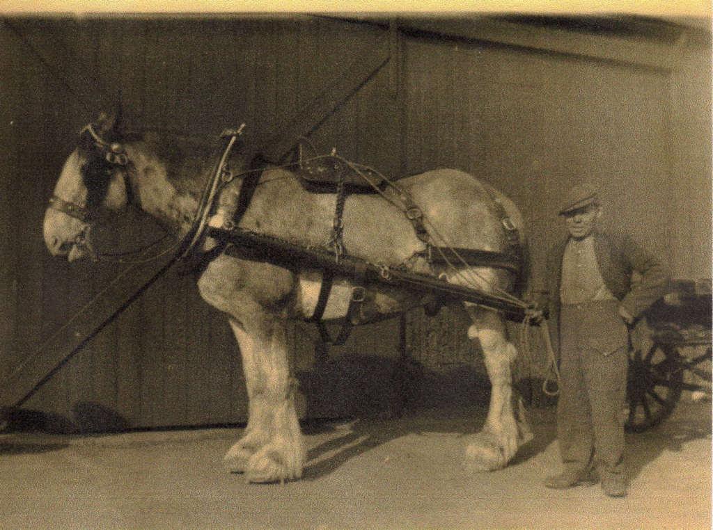 Photo: William Gunn Coal Cart and Horse