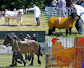 Champions at Caithnes County Show 2013