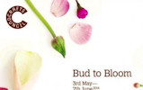 Bud to loom At St Fergus Gallery, Wick from 3rd May to 7th June 2014