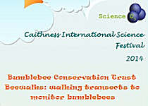 Bumblebees at Caithness Science Festival 2014