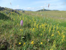 Flower grasslands - brilliant for bees