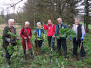 Giant Hogweed control by Caithness Countryside Volunteers at Wick Riverside