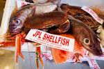 J P L Shellfish