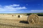 Deadline for Single Application form for crofter snd farmers