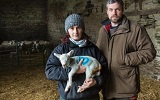 Ravens Attack Lambs in Caithness - problem getting worse