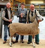 Suffolk continetal Reserve Champion at Dingwall 24 September 2016 - Suffolk & continental show reserve champion – Mr Gordon U. Mackenzie, Broomhill, Muir of Ord – Blue Faced Leicester shearling out of a homebred ewe and by a Mendick ram.