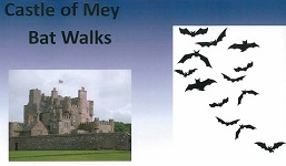 Bats at Castle of Mey