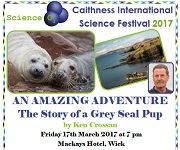 Story of a Grey Seal Pup