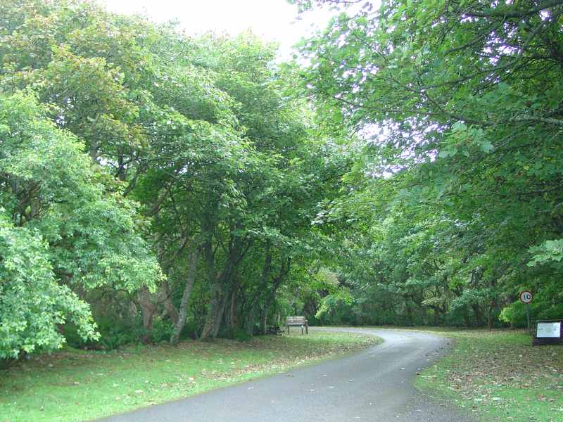 Photo: Achvarasdal Woodland Walk